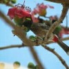 Song Of Bulbul  at My home