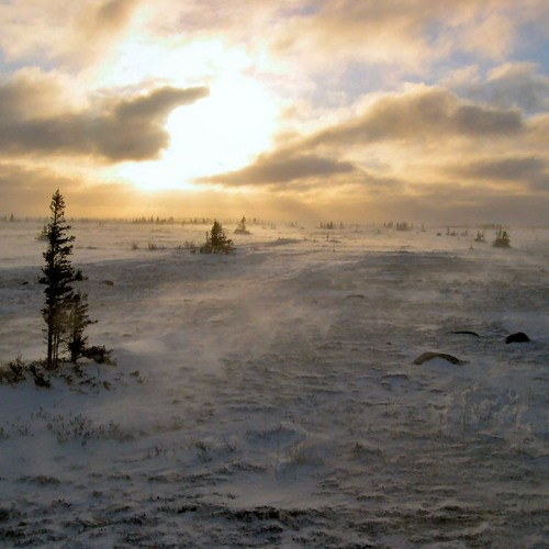 Tundra's Lullaby