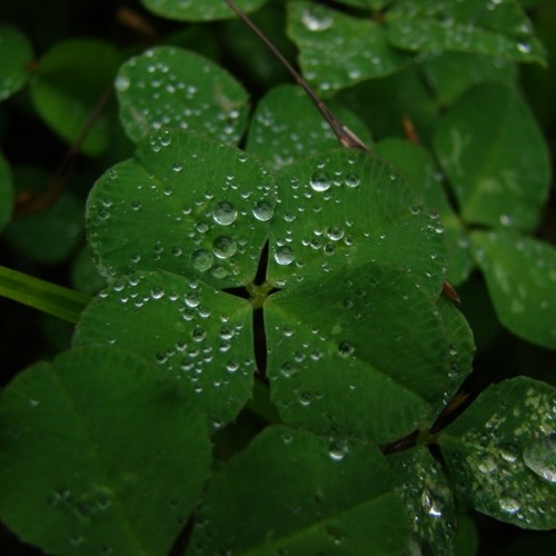 OverHertz - Four Leaved Clover (Bulker Remix) [FREE DOWNLOAD]