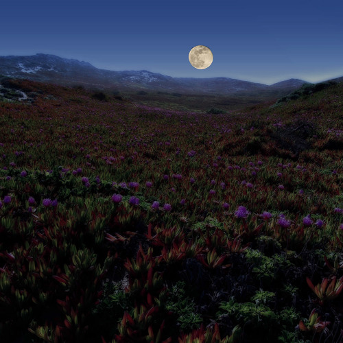 Running on a dark meadow - Milana (composition, piano), Ray McGinnis (arrangement, production)