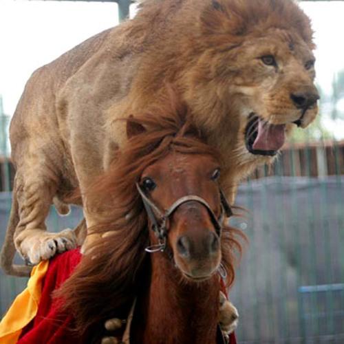 Lion On Horseback-Kasan Da Julah  (Reggae Poetry) **Free Download**