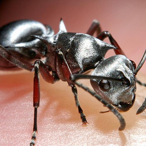 Silver Ant Ensemble
