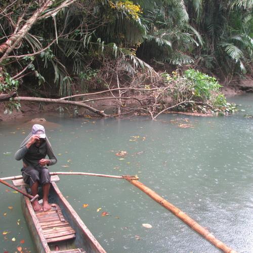 Fieldrecording: Paddle in rainy mangrove jungle, Western Java, Indonesia