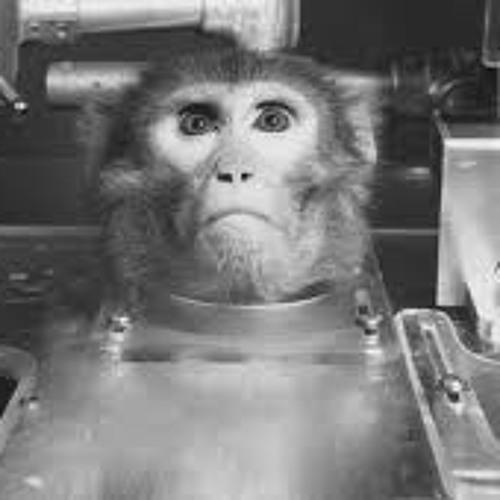 Monkey Say Monkey Do - On liquid liquid Esmeralda remix