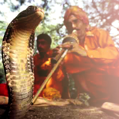 Purple Traitors - Snake Charmer (wip)