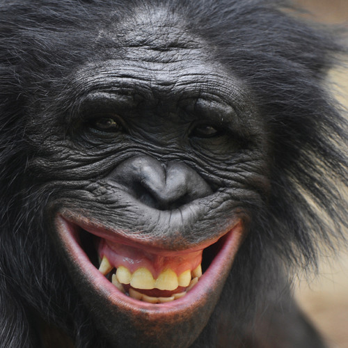 Bonobobonbon