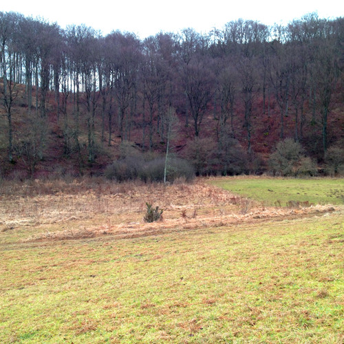 Field, Small, Holler with Forest 50m