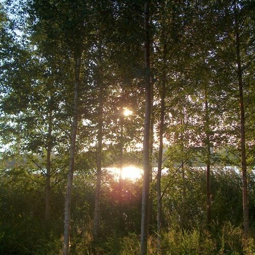 Auringonsäteet (from Päivikin satu)
