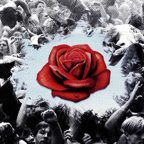 Rebelle Fleur - Sally's Roses