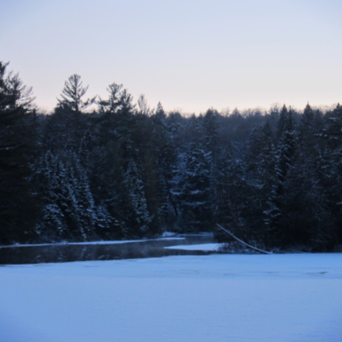 Forest,Wind,Lake Cracks,Tree Creaks