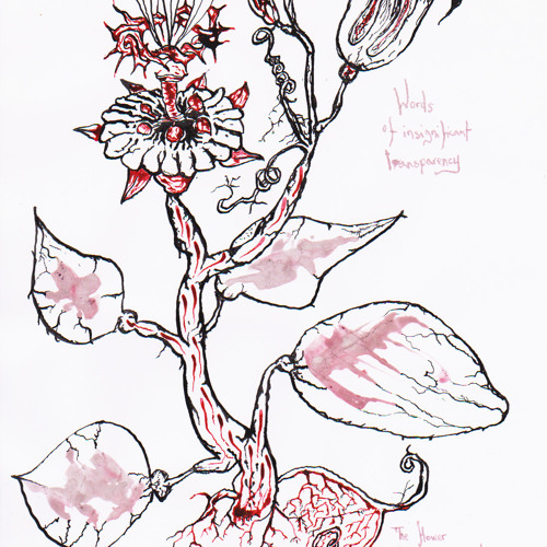 Mammillaria Elongata Cristata  (excerpt)