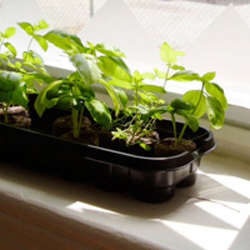 Starting your own plants from seed: Are you up to the challenge?