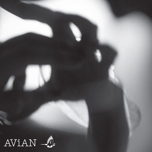 AD/S | Transversal | AVN 003