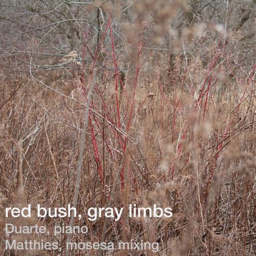 Red bush, gray limbs (Duarte, piano, Matthies, mosesa, mixing)