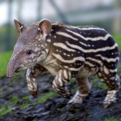 Frank Maris - The Story of the Tapir