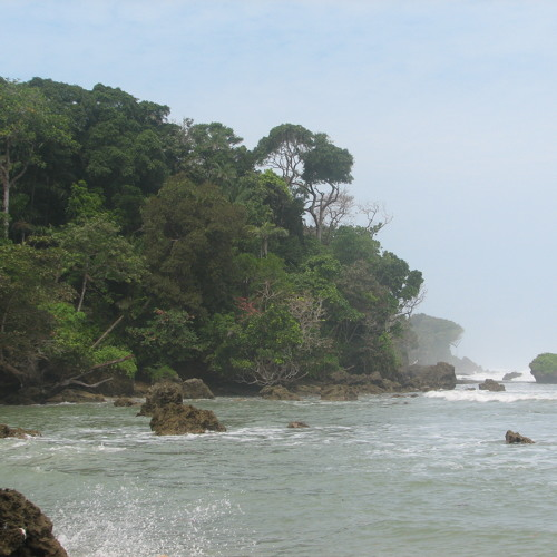 Fieldrecording: Where the jungle meets the sea: monkeys, birds, waves at the tip of western Java