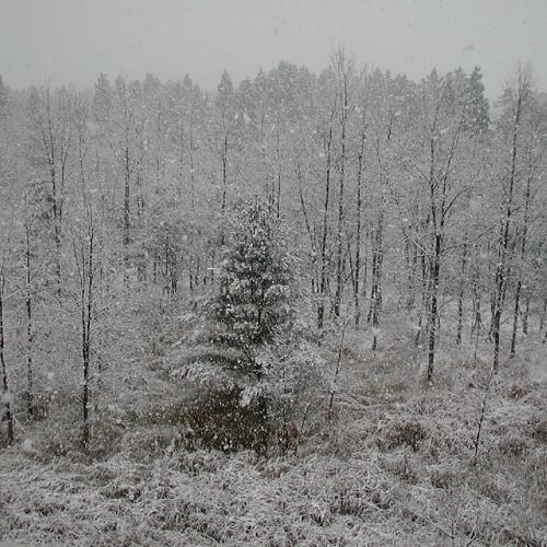 Snow In Nagaoka