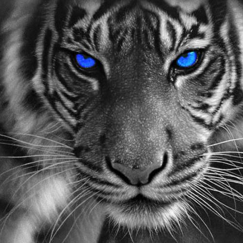 Eye of the tiger (Phil Dextor Dance Remix)