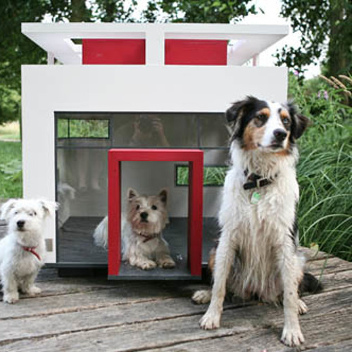 Dog House!