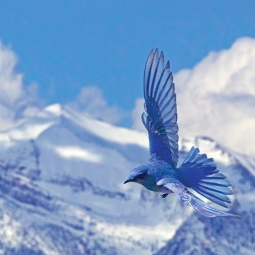Where Do My Bluebird Fly