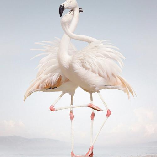 Micro Cosme 13 - Flamingo