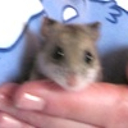 SmallSong (figsy remix)