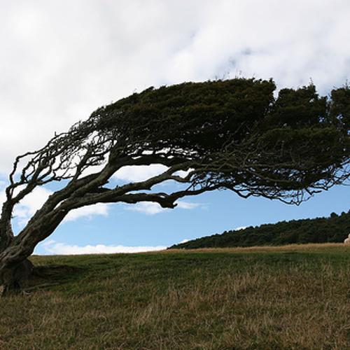 Wind blown (I've always been here)