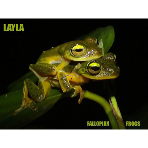 Fallopian Frogs - LAYLA - produced by Dazastah