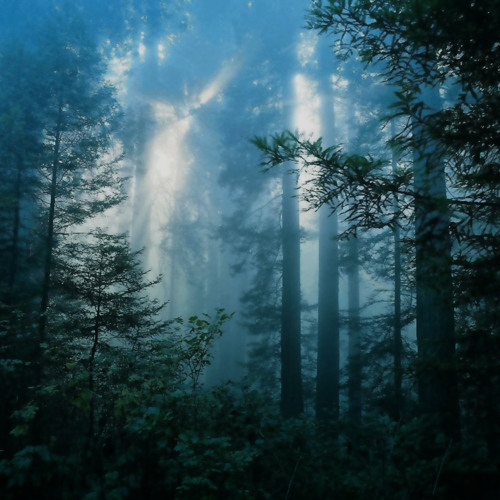 Dark Forest (160 bpm)
