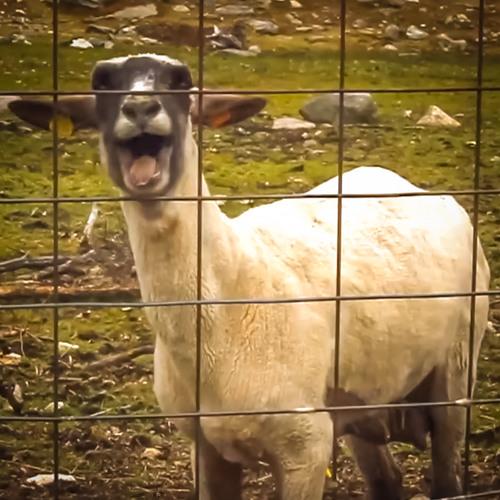 Sheepstep (WIP)