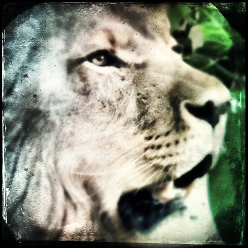 Aaron Spectre - Lion Mix