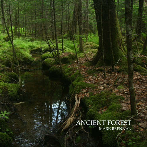 Ancient Forest, Album Sample
