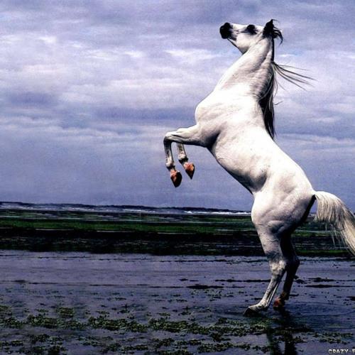 Horse beat(feat acap of Mos Def - Beef)