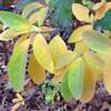 Leaves Change Color by Neta Raanan