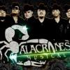 Alacranes Musical TU NO TIENES LA CULPA