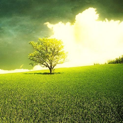 Vamos Art - The Green Carpet Promo Set