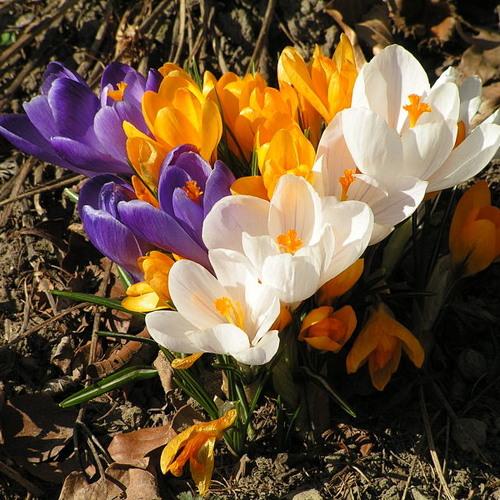 Spring Calling