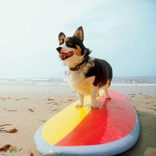Dogg Beach (Hip Hop Bossa Nova)