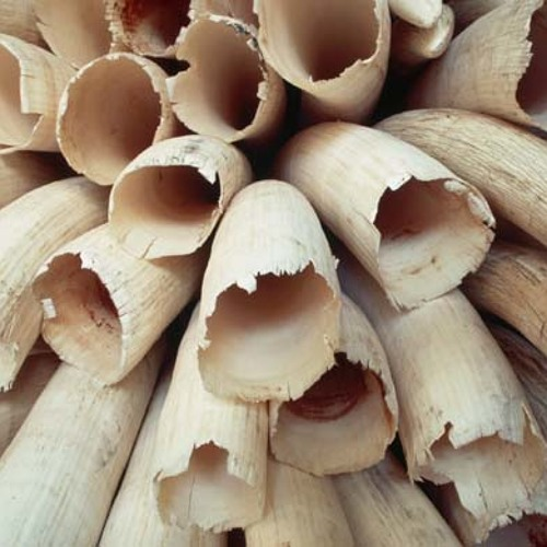 China's role in the illegal African ivory trade