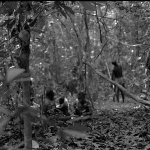 BaAka net hunt in the forest (Central African Republic)[1997 21 2 17 A 10-1]