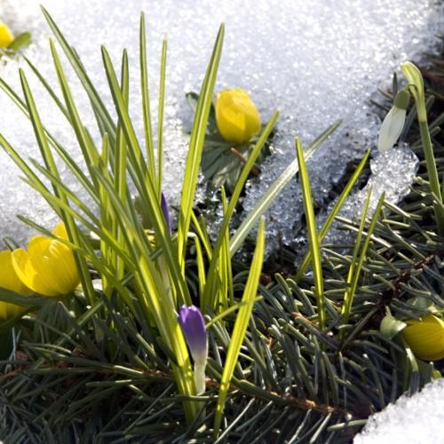 HERR - Frühlings Erwachen
