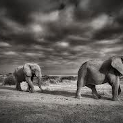 THE MARCH OF THE ELEPHANTS/RELOADED & FINAL VERSION