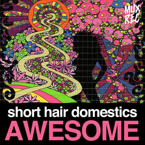 Short Hair Domestics - Awesome