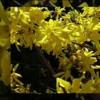 13) Giallo Primavera - Yellow Spring (soundtrack for video - 2013)