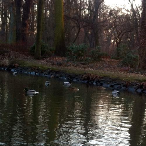 /ducks/ Park Szczytnicki