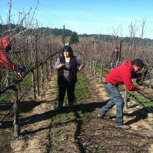 Audiograph's Sound of the Week: Sonoma County Pruning Competition
