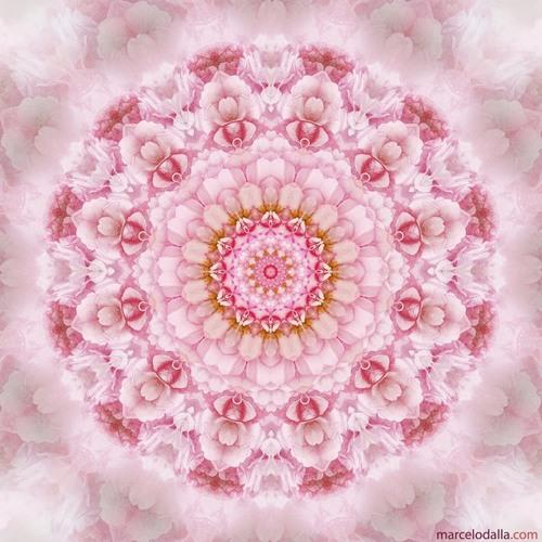 Om Namah Shivaya - Flor do Coração
