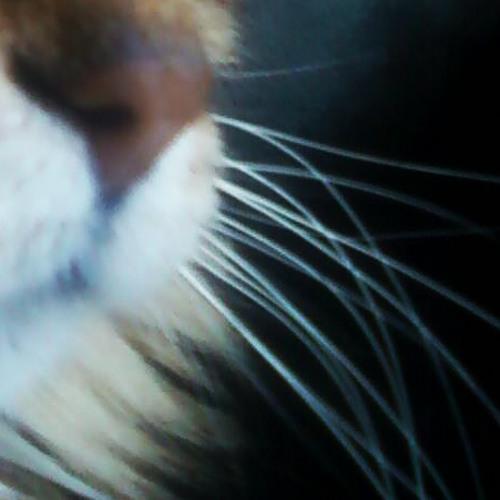 Ciel d'azur : Mouvement algique; Les affres [rough mix]