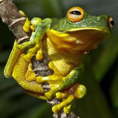 21-12-12 Summer solstice frogs