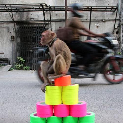 monkeys against mondays (ESB-Mix)